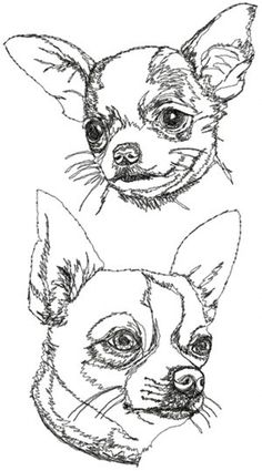 Advanced Embroidery Designs - Chihuahua (Smooth Coated) Set