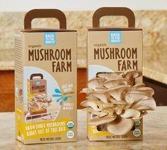Back to the Roots Organic Mushroom Farm The Mushroom Farm and Mushroom Mini Farm are certified organic mushroom kits that grow fresh oyster mushrooms in just 10 Edible Mushrooms, Stuffed Mushrooms, Wild Mushrooms, Fungi, Growing Mushrooms At Home, Mushroom Grow Kit, Vertical Farming, Organic Gardening Tips, Urban Gardening