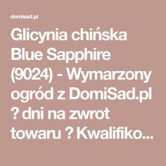 Glicynia chińska Blue Sapphire (9024) - Wymarzony ogród z DomiSad.pl  dni na zwrot towaru ✔ Kwalifikowane sadzonki 📞 ZADZWOŃ 664 191 496 Wisteria, Blue Sapphire