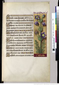 Horae ad usum Romanum, dites Grandes Heures d'Anne de Bretagne | Gallica