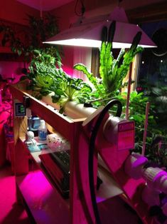 Indoor Gardening and Home Hydroponics | http://www.powerhousehydroponics.com/indoor-gardening-home-hydroponics/