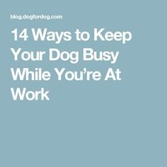 14 Ways to Keep Your Dog Busy While You're At Work