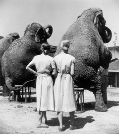 """""""Gemelas con elefantes"""" (1947). Obra de Louise Dahl-Wolfe (1895-1989). Museo de Fotografía Contemporánea de Chicago.   """"Twins with elephants"""" (1947). Work by Louise Dahl-Wolfe (1895-1989). Museum of Contemporary Photography in Chicago."""