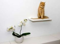 Gallery │ Photos of Interiors with Trendy Contemporary Cat Furniture Rustic Cat Furniture, Contemporary Cat Furniture, Cat Shelves, Play Spaces, Cat Toys, Cozy House, Cool Cats, Floating Shelves, Kitty