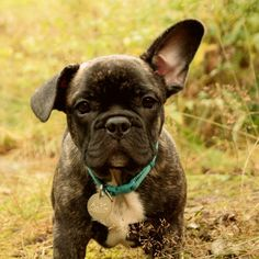 One ear up yo!