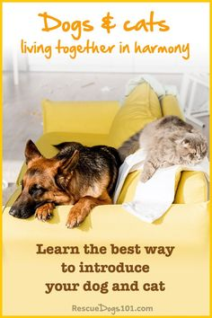 Make the introductions smooth and stress-free with these 7 easy steps. There is a good chance your dog and cat will get along once they get to know each other. It takes time, just as if you were introducing a new dog to another dog in the house. Dog Rescue Shelters, Rescue Puppies, Introducing A New Dog, Jumping Dog, Animal Rescue Stories, Living With Dogs, Cute Dog Photos, Puppy Training Tips, Dog Behavior