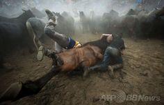 スペイン北西部サブセド(Sabucedo)村で行われた馬の祭り「ラパ・ダス・ベスタス(野獣の毛刈りの意)」で、野生の馬を押さえつける男性たち(2014年7月5日撮影)。(c)AFP/MIGUEL RIOPA ▼7Jul2014AFP|「野獣の毛刈り」祭り、野生の馬を追い込む男性たち スペイン http://www.afpbb.com/articles/-/3019842 #Rapa_das_Bestas_of_Sabucedo #Rapa_das_Bestas_de_Sabucedo
