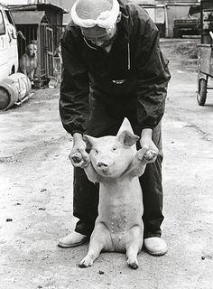 by Toshiteru Yamaji. He did a 10 year photo essay about the relationship between a piglet and the pig farmer. S)