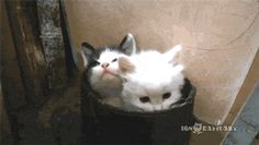 Cute overdose