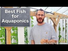Thinking about starting your own aquaponics system? It's time to think critically about the fish you'll use. This video identifies the three most important considerations before introducing fish into your system.     Nate is the Co-Founder of Bright Agrotech, a leader in vertical, space saving aquaponics and hydroponics systems and a commercial pr...