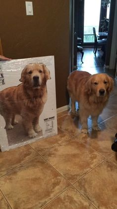 On Thursday, she surprised him with a life-size cardboard cutout of Jesse.   This Mom Surprised Her College-Bound Son With A Cutout Of Their Dog