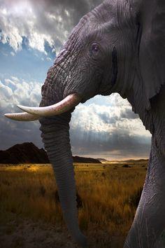 """♂ wildlife photography animal elephant """"walking alongside the big boys"""" by David Hobcote~~"""