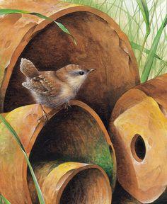 """Terra cotta Wren"" by David Finney - Wildlife Artist & Illustrator Bird Illustration, Illustrations, Bird Drawings, Bird Pictures, Watercolor Bird, Wildlife Art, Bird Art, Beautiful Birds, Painting Inspiration"