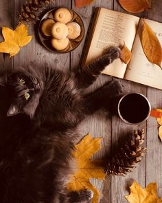 Every Day is Halloween. Every Season is Autumn. Lover of All Things Cozy. Fall Inspiration, Autumn Aesthetic, Cat Aesthetic, Autumn Cozy, Autumn Fall, Tier Fotos, Samhain, Mabon, Hello Autumn