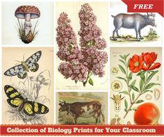 Free Vintage Art Prints - Classroom Visuals. - Montessori NatureFacebookGoogle InstagramPinterest
