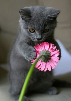 Cute Kittens Outside Cute Cats Saying Funny Things Baby Animals, Funny Animals, Cute Animals, Funny Cats, Animal Babies, Safari Animals, Cute Kittens, Cats And Kittens, Kitty Cats