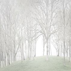 White Trees, photography by Yann Grancher