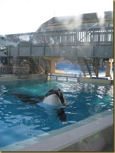 What kind of life is this? Floating around in a tiny concrete tank? Don't support animal cruelty. Don't go to SeaWorld.