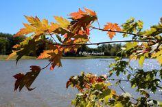 Sunday Drive Pierrefonds, Senneville, Sainte-Anne-de-Bellevue, QC September 2015