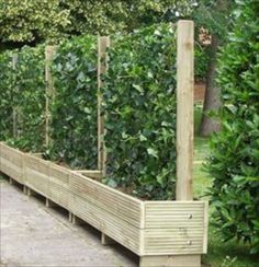 alternative to fences. Would be great for a vegetable garden when you only have a little space with sun. living fence- keep the chickens from the garden~ I was actually just thinking of doing this because we need a new garden fence! Backyard Fences, Garden Fencing, Garden Landscaping, Backyard Privacy, Privacy Planter, Garden Privacy, Vertical Planter, Backyard Ideas, Bamboo Planter