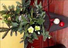 Christmas pot decoration- kültéri kaspó karácsonyi díszítés Christmas Wreaths, Holiday Decor, Plants, Home Decor, Decoration Home, Room Decor, Planters, Plant, Planting