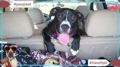 Travelling with dogs in Dogland  Travel Tips  Travel Tips  03/08/2017  Cesars best dog travel tips From www.cesarsway.com  Bringing your dog on vacation with you just adds to the fun and alleviates the worry of not knowing whats happening with your dog while youre on the road. You need to do your homework on dog travel though. Planes and cars arent designed with dogs in mind and you need to know what to expect when you reach your final destination. By planning your dog travel ahead of time…
