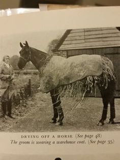 How to dry the wet horse!   http://www.proequinegrooms.com/index.php/tips/grooming/how-to-dry-the-wet-horse-when-it-s-cold/