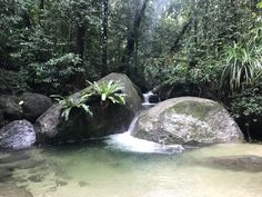 Daintree Rainforest - A One Day, Self Drive Itinerary! - Just Simple Adventure