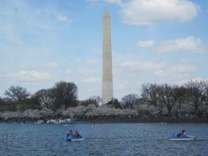 Washington Monument during Cherry Blossom Season 2011