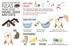 Getting Rid Of Fleas On Dogs - http://pets-ok.com/getting-rid-of-fleas-on-dogs-dogs-3292.html