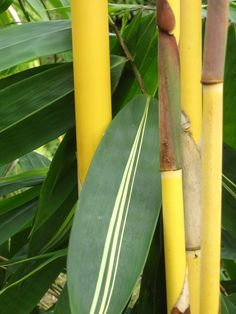 bamboo | Bamboo which shoots can be eaten | Take control of your own survival ...