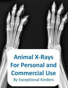 Animal X-Ray Images for Commercial Vet Office, Leopard Animal, Elementary Science, Commercial Photography, Things To Know, Kindergarten, Teaching, Spiders, Bats