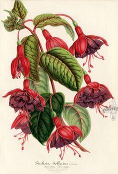 Gallery.ru / Фото #11 - Анатомия растений 1 - lanaluz