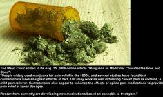 Cannabis for Pain Relief  #cannabis #thc #marijuana #medicalmarijuana #health #thc #cbd #medical #health #pain