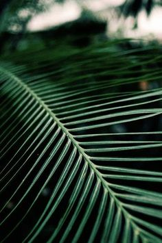 nature, green, and leaves image Tropical Leaves, Tropical Plants, Conservatory Plants, Nature Green, Flowers Wallpaper, Plant Wallpaper, Poster Photo, Plantation, Green Life
