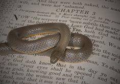 SPIRITUAL WARFARE: GOOD vs. EVIL, Part 3 of 4. #SpiritualWarfare #Good #Evil GreenePastures.org