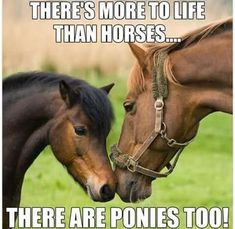 There's more to life than horses, there are ponies, too! Horse quote.