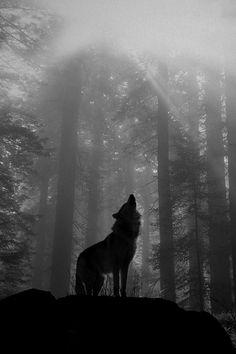 Le loup,symbole fidèle,dernier animale totem... Toutes les tribus indiennes ont un grand respect pour lui...