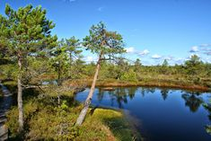 Rabas / In the bog Estonia by Minest Water Images, River, Outdoor, Search, Google, Photos, Outdoors, Searching, Pictures
