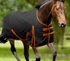 3 Ed Horse Blankets Available From Robinsons Equestrian