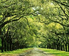 Long driveway with tree canopy