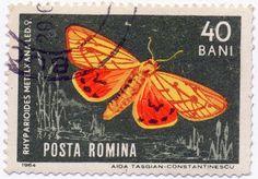 1964 Romanian Stamp - Rhyparioides metelkana