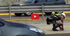 Policeman Runs Into Traffic To Save Kitten From Being Run Over