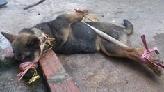 Petition · President of Vietnam, Trương Tấn Sang. Stop Vietnamese Catholics in Vietnam of KILLINGS and TORTURING dogs for Christmas NOW! The World is watching You! · Change.org