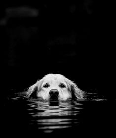 dogs Okay this is adorable i love golden retrievers adorable! My dogs Baby Dogs, Pet Dogs, Dog Cat, Doggies, Pet Pet, Cute Puppies, Dogs And Puppies, Adorable Dogs, Animals And Pets