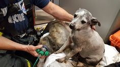 Firefighters rescue 33 dogs found 'gasping for air' in house fire