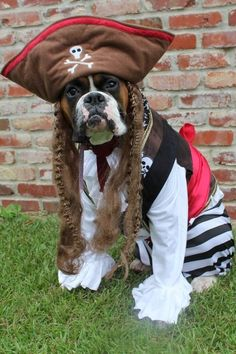 """Ahoy! In honor o' """"Talk Like a Pirate Day"""", we proudly present you mateys with 21 pups dressed in their seafarin' finest."""