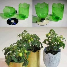 Using old plastic soda bottles, used CD's and a little spray paint makes really cute and alternate pot plant holders
