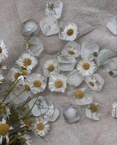 Cream Aesthetic, Classy Aesthetic, Flower Aesthetic, Aesthetic Vintage, Aesthetic Photo, Aesthetic Pictures, Aesthetic Backgrounds, Aesthetic Wallpapers, Fond Design