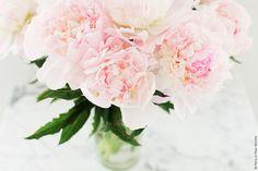 Pretty Pink Peonies | Paris